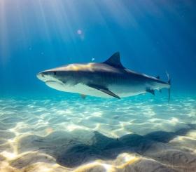 5 лучших фильмов с акулами