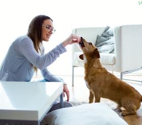 5 невероятных фактов о том, как меняется жизнь с появлением дома собаки