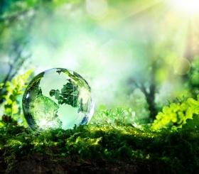 4 правила экологичного образа жизни