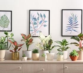 Подбираем комнатное растение по знаку зодиака