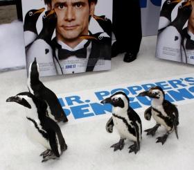 3 увлекательных фильма про пингвинов